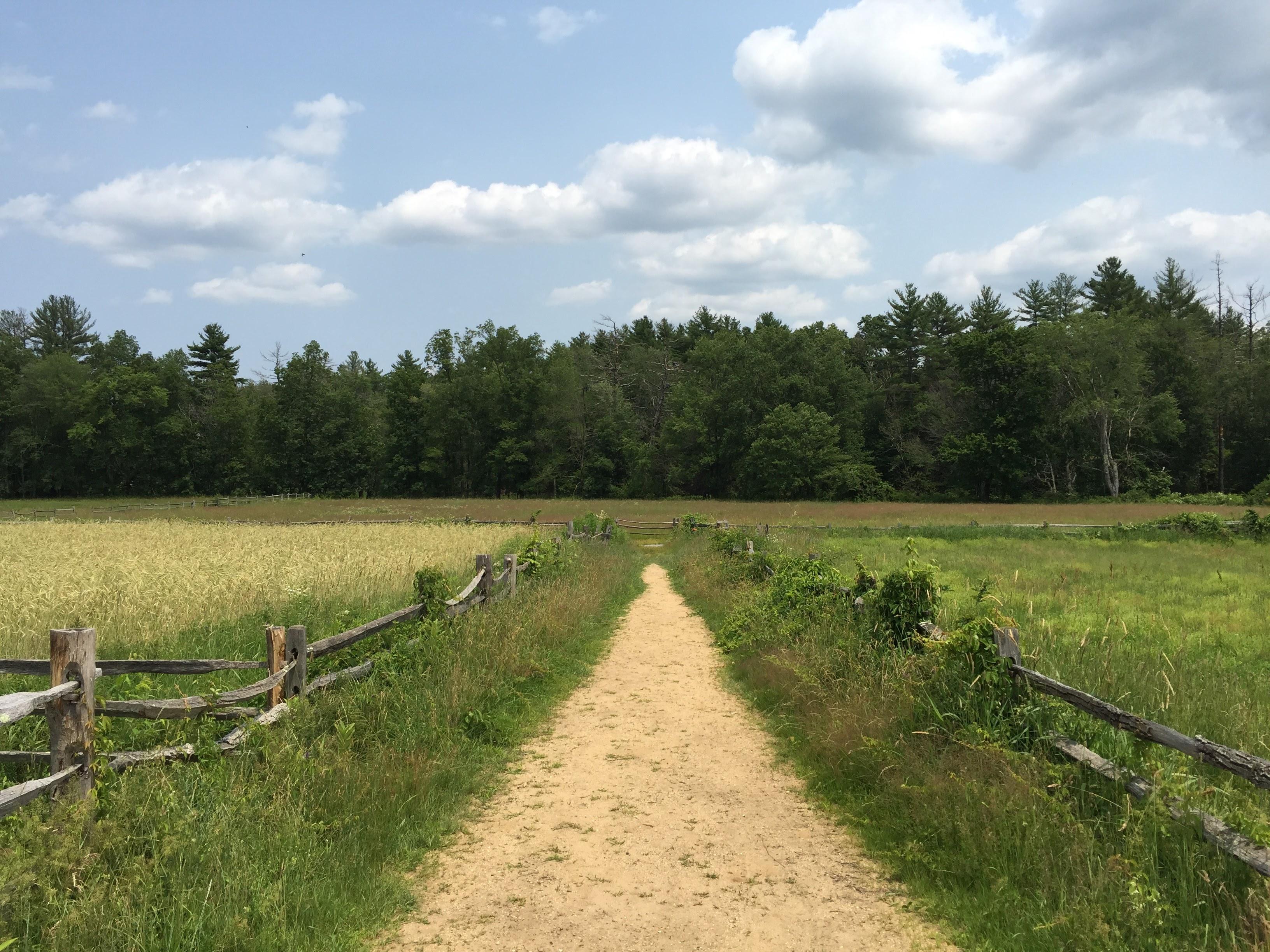 Farm Road Jamie Todd Rubin